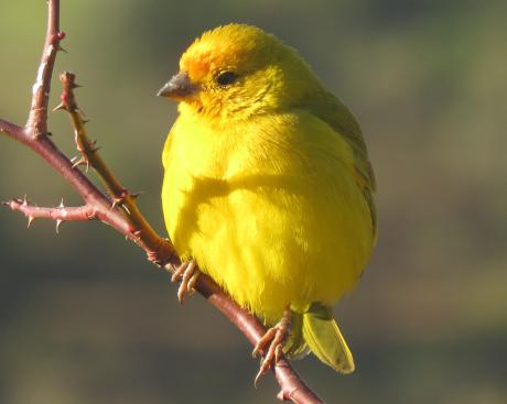 Warrant Canary